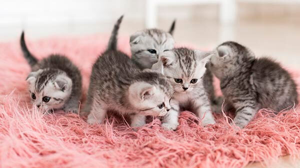 Cats Adoption Fair