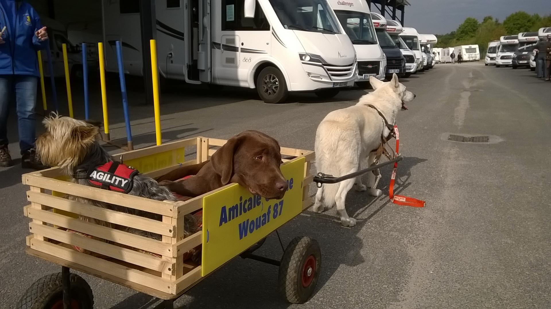 Bienvenue à l'Amicale Canine